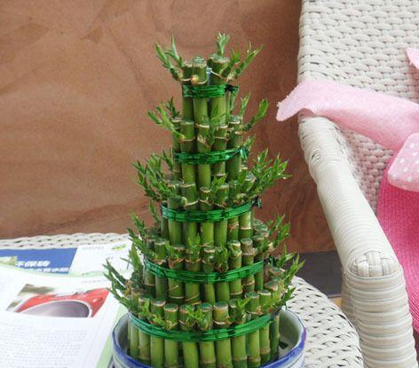 竹(小5塔)富贵竹塔