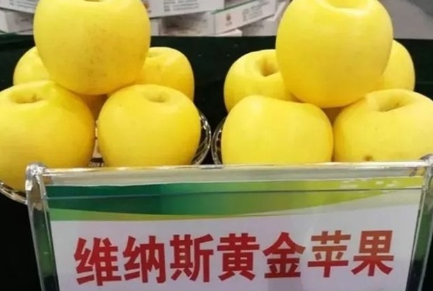 维纳斯黄金苹果苗基地延边