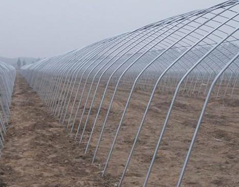 连体温室大棚牲畜养殖大棚一平方多少钱